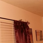 2 of the stubborn parakeets that would not cooperate and go back into their cage.